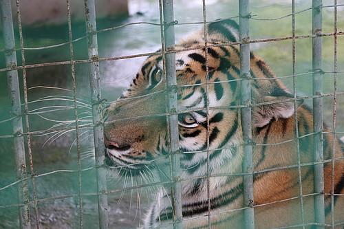 Illegal Wildlife Trade | WWF