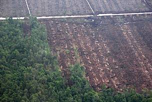 """Zero deforestation"" champion creates new risks for Indonesia's forests and peatlands"