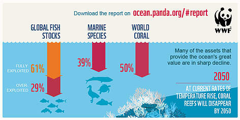 Why is our ocean at risk? | WWF