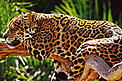 The new protected areas will help protect the endangered Brazilian jaguar (Panthera onca) and other Amazon species.