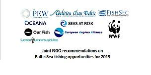 Joint NGO recommendations on Baltic Sea fishing opportunities for 2019