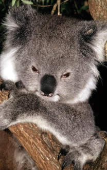 koala_53990_351855 Jobs From Home Greece on homes from india, homes from venezuela, homes from china, homes from around the world, homes from spain, homes from ancient rome, homes from the renaissance, homes from egypt, homes from ghana,