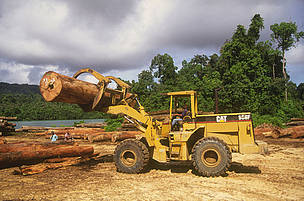 APP and APRIL violate zero-deforestation policies with wood purchases from Djarum Group concessions in East Kalimantan