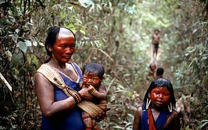 Indios kayapo en la ruta de las plantas medicinales del Jefe Utey.