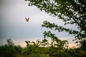 Las monarcas llegan al Mariposario de Chapultepec, México | WWF