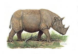 Asian rhinos | WWF