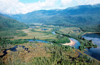 Coastal Rainforests of British Columbia: the Great Bear Rainforest Agreement