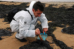 A WWF volunteer helps with clean-up efforts. Baltic Sea, Russia.