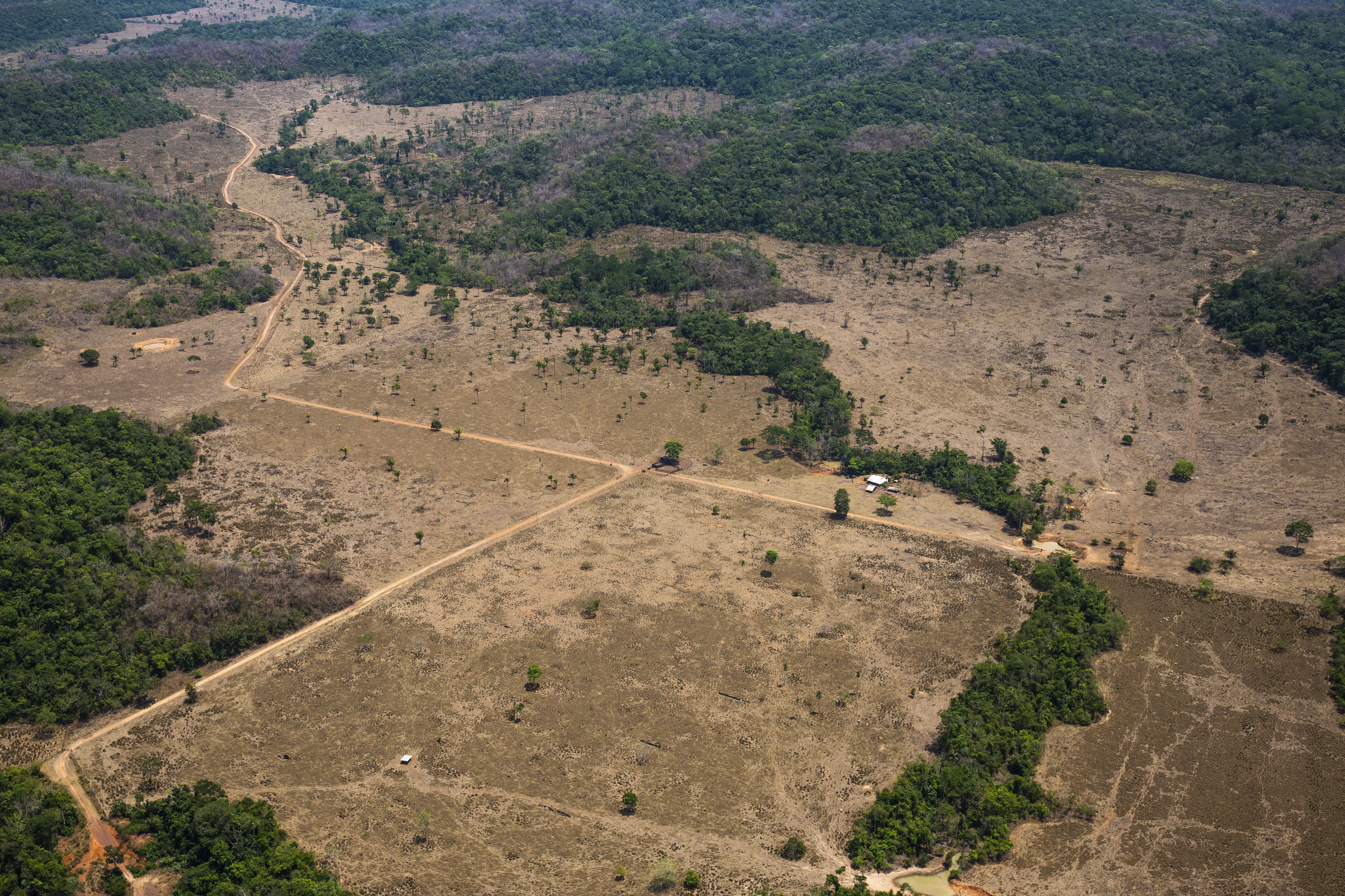 As Deforestation Rates Spike In The Brazilian Amazon Wwf Calls