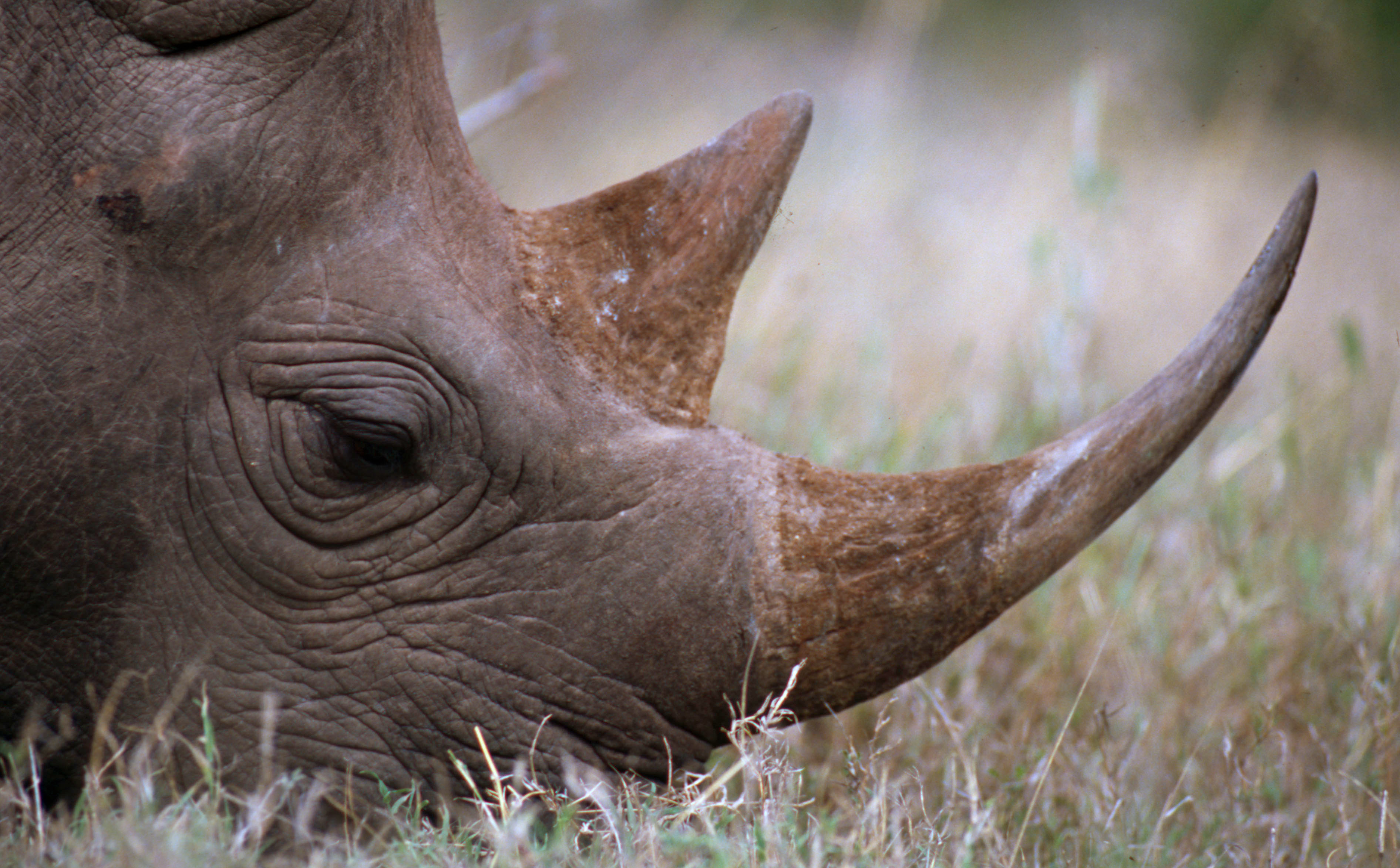 WWF's 'Most Wanted' List Highlights 10 of the Most Widely