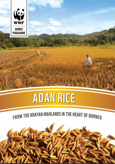 Adan Rice, Krayan Highlands, HoB, Heart of Borneo