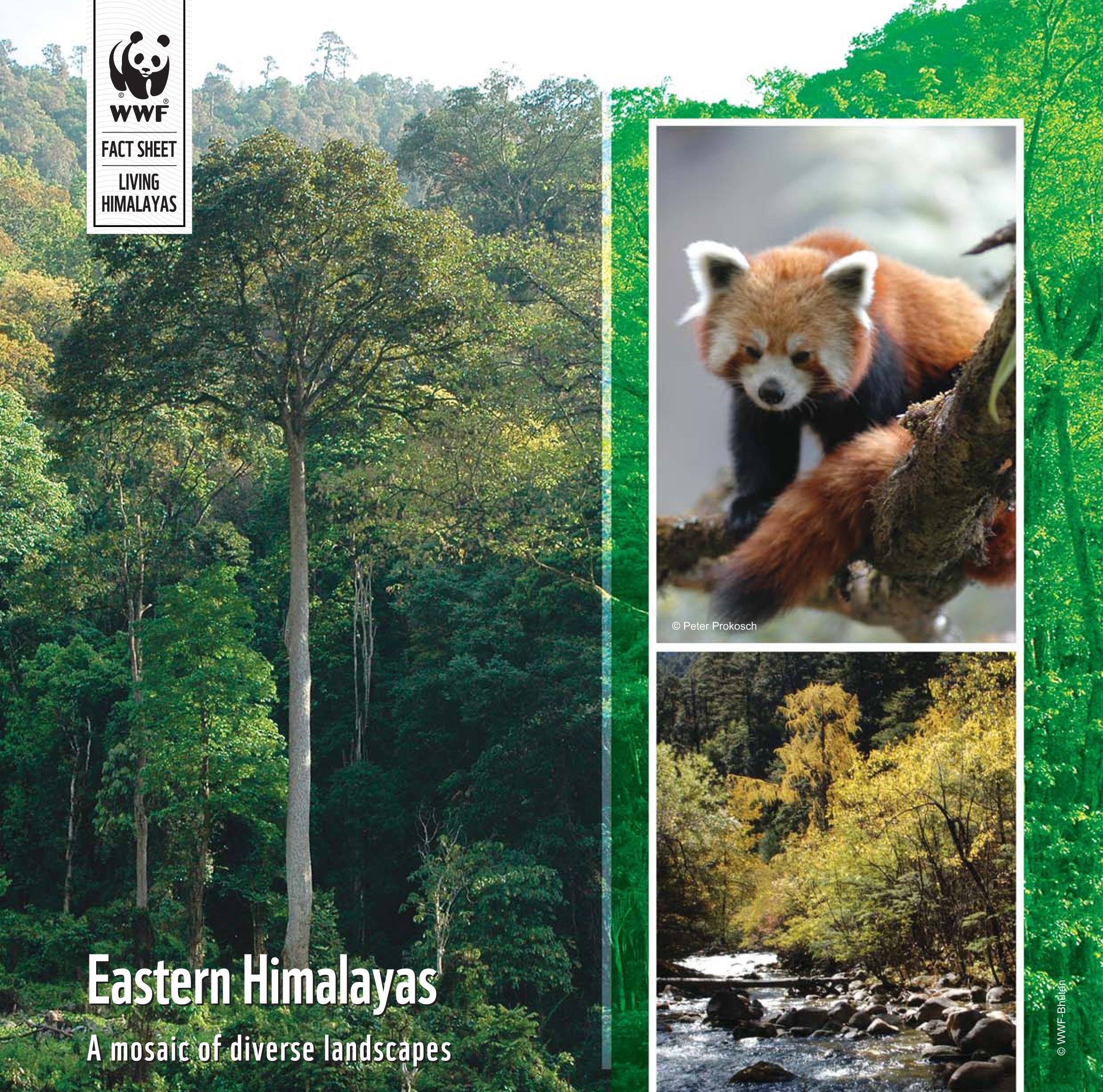 red panda food chain