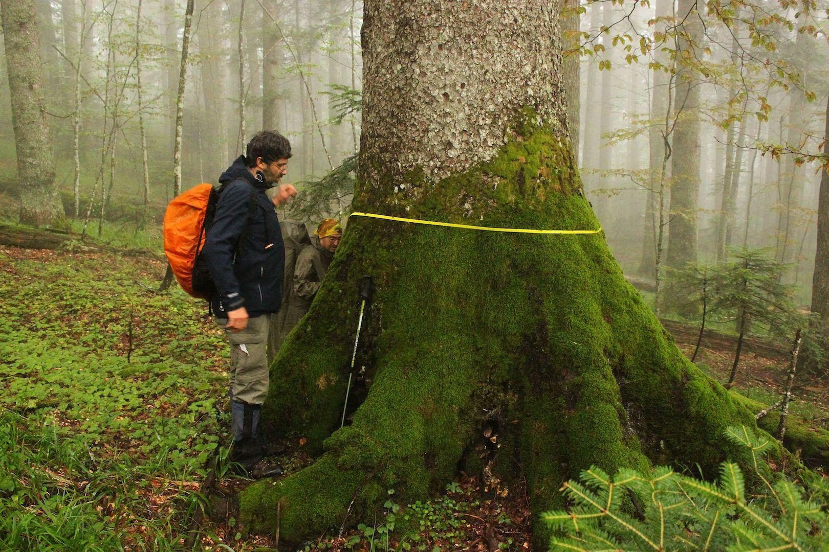 Mapovanie pralesov, Foto: M. Jasík