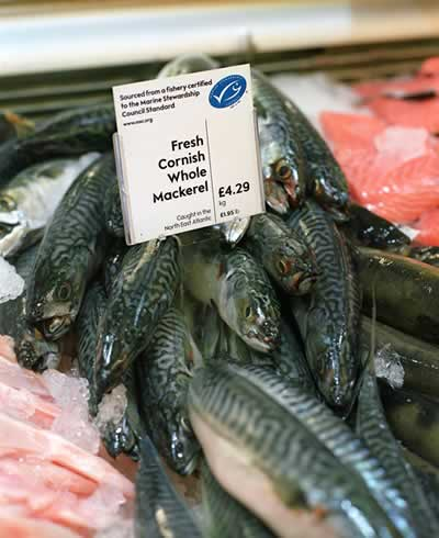 Seafood ecolabels under the spotlight in new WWF report | WWF