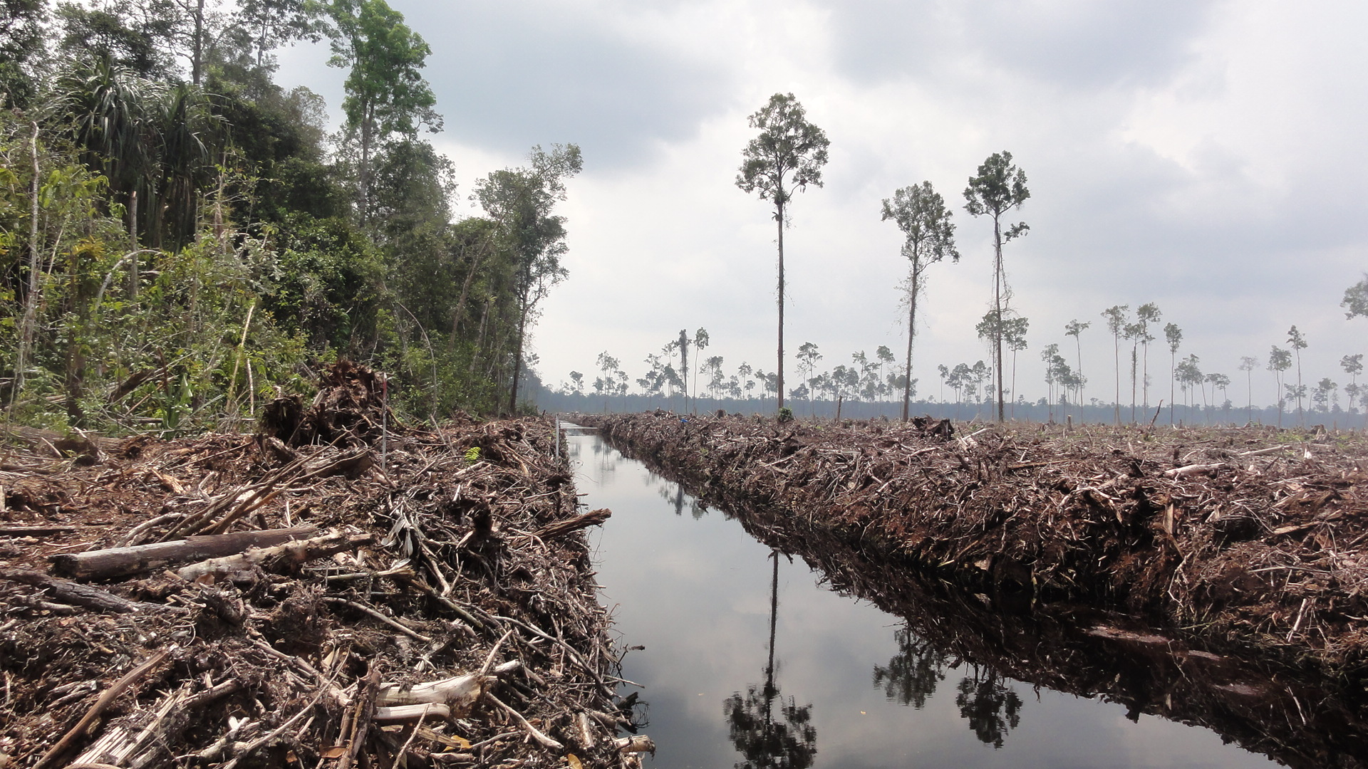Asian agri and the future of palm oil essay