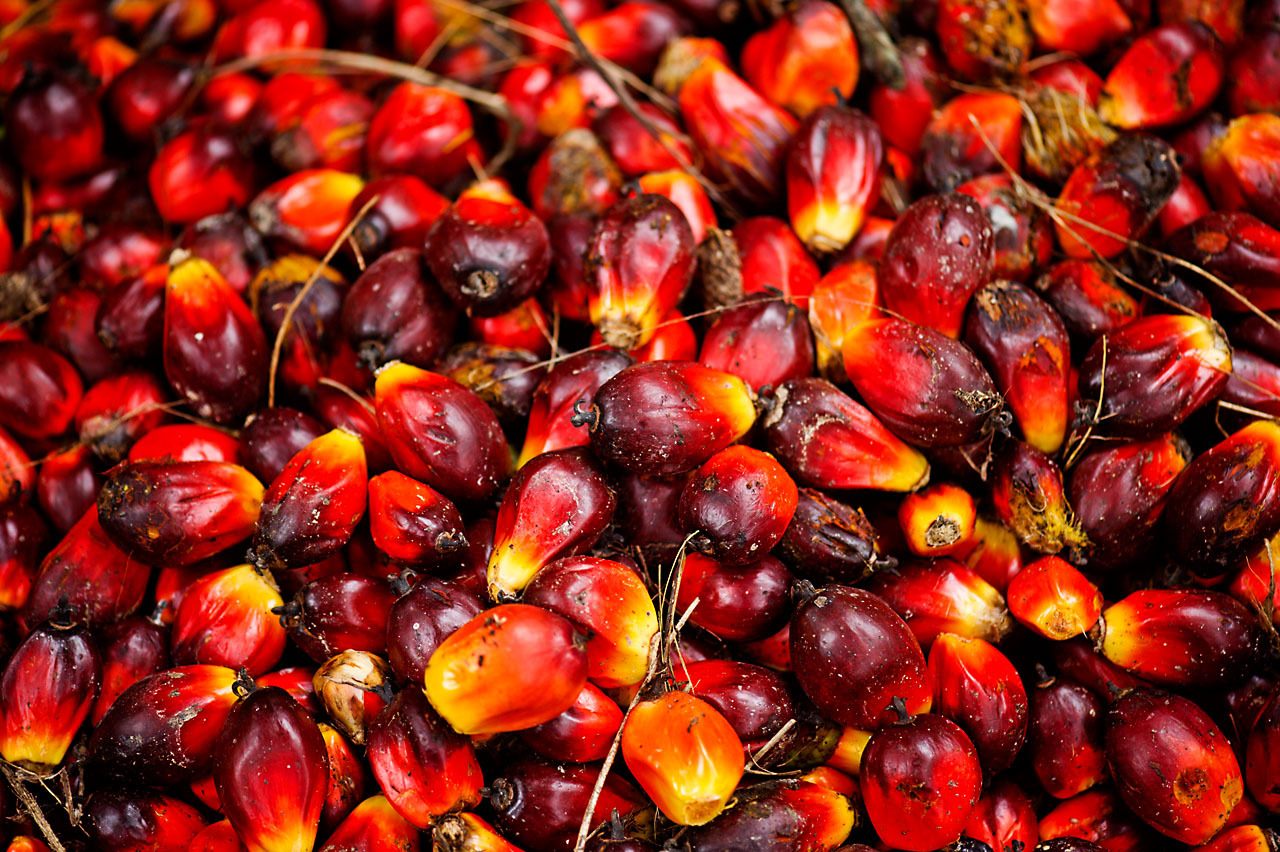 Wwf Applauds Expulsion Of Non Reporting Palm Oil Companies