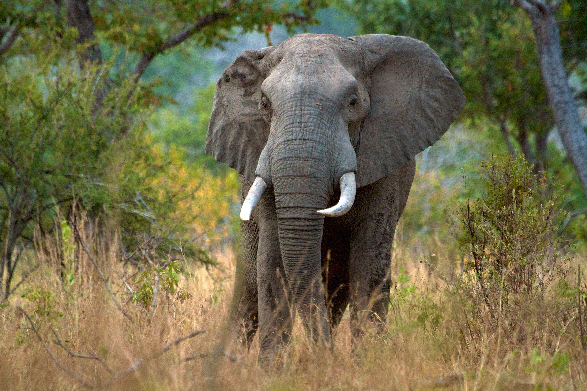 Elephants Could Disappear From Tanzania World Heritage Site Within