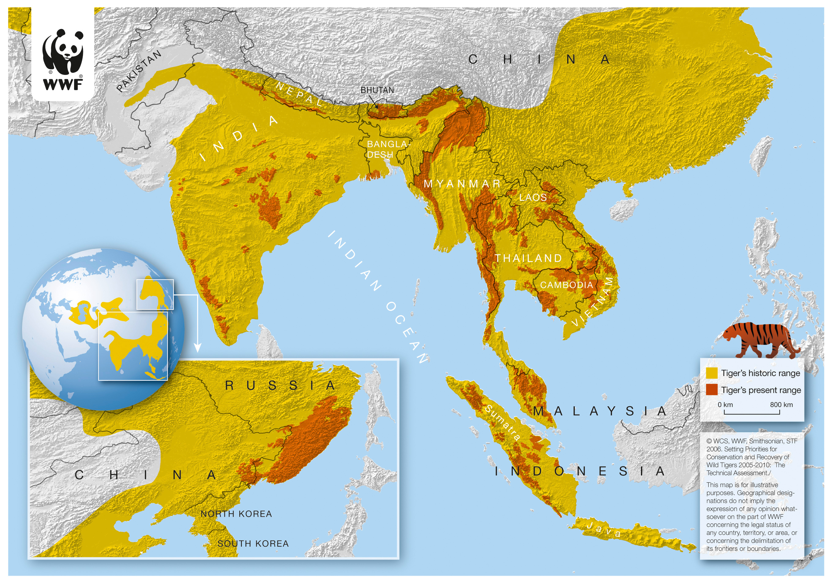 Global wild tiger population increases, but still a long way to go   WWF