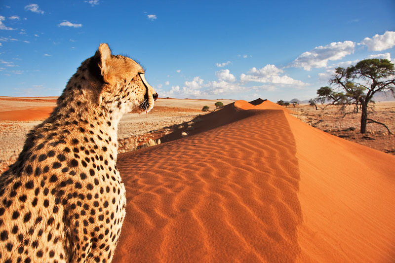 Namibian government and people lauded for conservation successes
