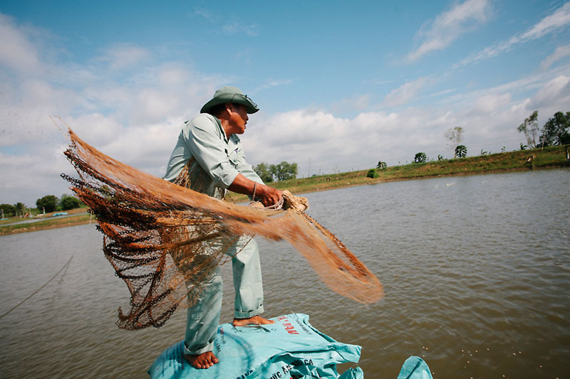 In Vietnam, Helping Catfish Farming Become More Sustainable