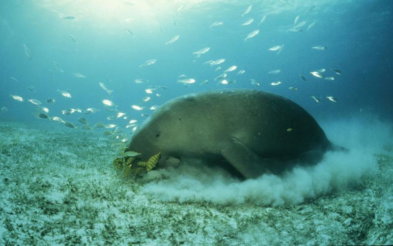 Saving Mermaids in the Davao Gulf | WWF