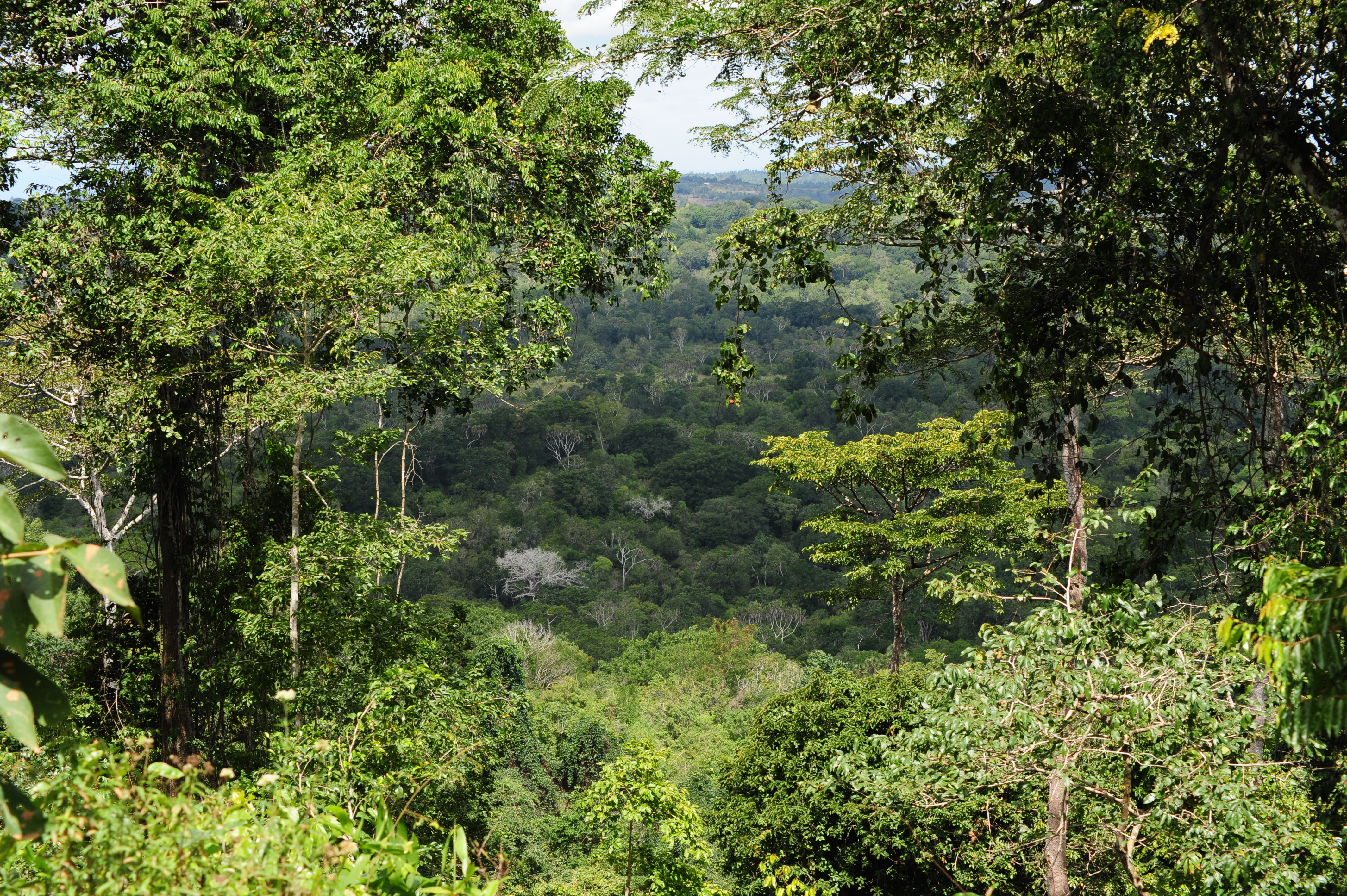 Natural Resources Of African Rainforest