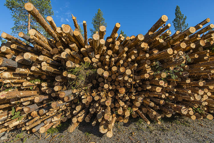 WWF Enforcement  Review of the EU Timber  Regulation (EUTR)