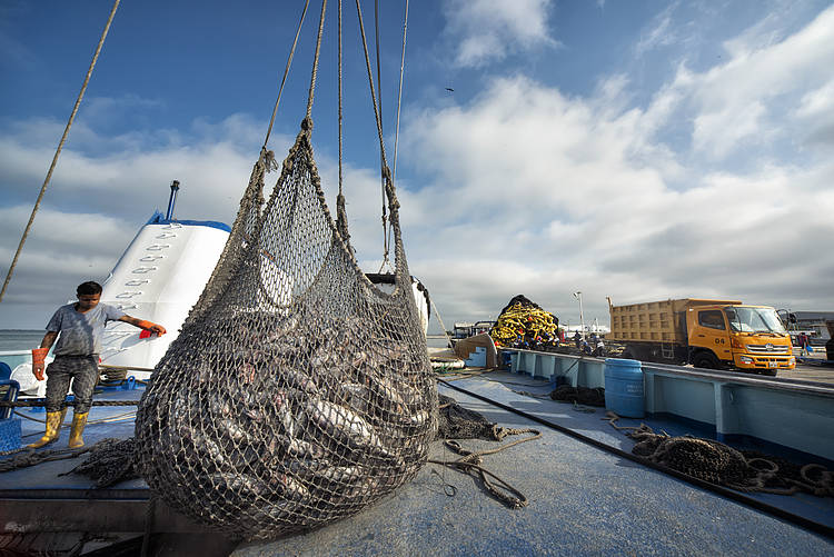 Securing the future of fisheries