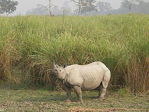 Rhinos and humans come into constant conflict in the Eastern Himalayas as the animals regularly damage and destroy crops.