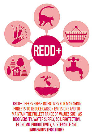 REDD+ aims to make forests more valuable standing than cut down.