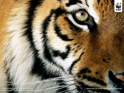 Wallpaper gallery wwf - National geographic wild wallpapers ...