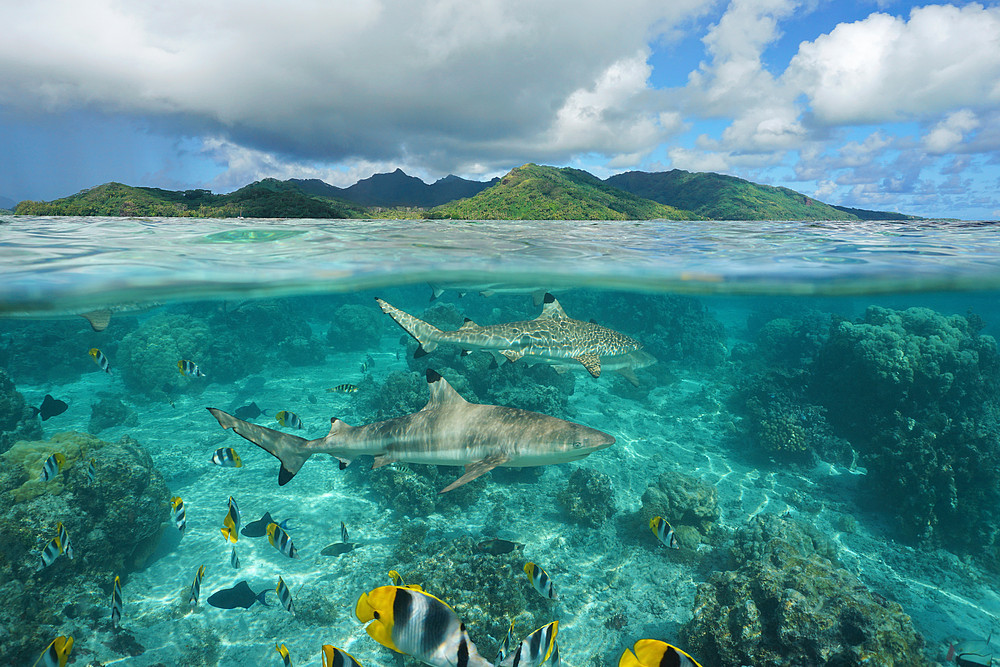 Say No Shark Fin | WWF