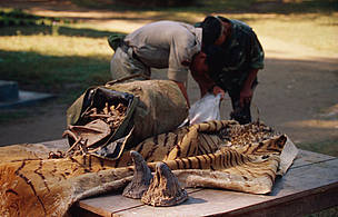 Confiscated rhinoceros horns, tiger skin and bones Chitwan National Park, Nepal.
