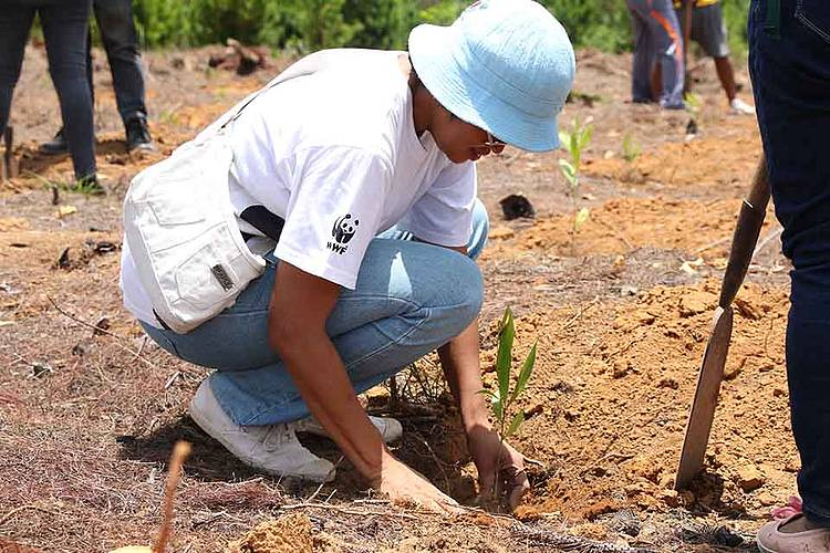 A guide for a successful and sustainable reforestation in Madagascar