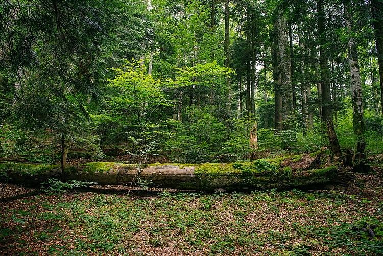 WWF Calls for a Public Debate on the Results of the Romanian National Forest Inventory