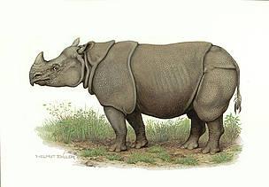Asian rhinoceros population