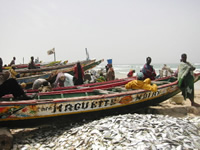Senegal celebrates creation of new marine protected areas