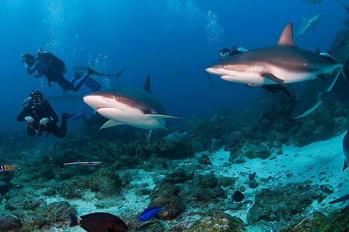 Reef Sharks | WWF