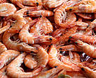 Farmed shrimp