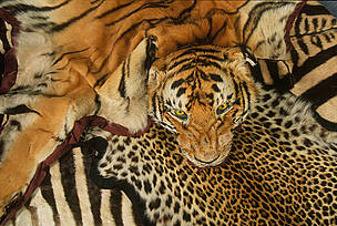 Creativity Needed To Reduce Demand For Endangered Species