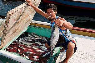 Skipjack tuna (Katsuwonus pelamis) from Mabul fishermen delivering their catch to Semporna, Sabah, Malaysia.