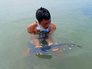 The rescued shark was the smallest whale shark ever recorded in the Philippines, and possibly the smallest ever found in the world. 7 March 2009.