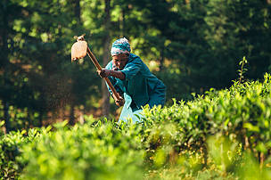 Nancy Rono, Farmer, working on her farm.