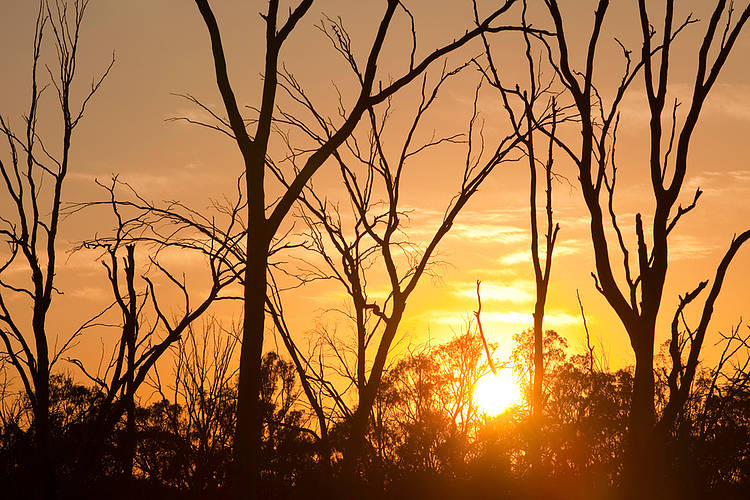 WWF reacts to WMO confirmation of second hottest year ever