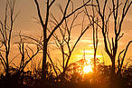 An unprecedented drought has lead to low water levels on the Murray River, resulting in the death of iconic Red Gum trees. ©Global Warming Images / WWF
