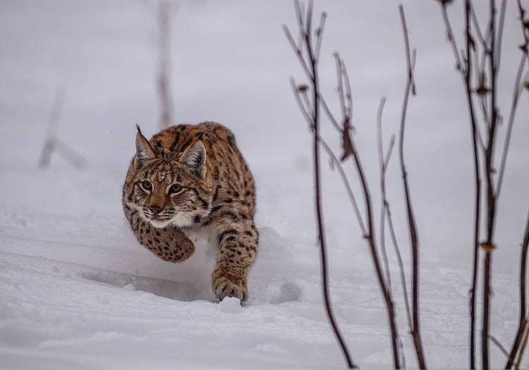 Experts from the Carpathians Cooperate in the Fight against Illegal Killing of Large Carnivores