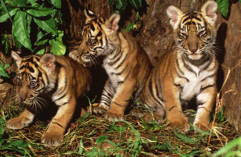 Mammals | WWF