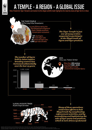 Infographic on tiger farms in Asia