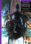 Cover of MARKET FORCES -- AN EXAMINATION OF MARINE TURTLE TRADE IN CHINA AND JAPAN