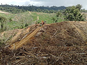 Logging highway opened by APP an partners will split in half one of Indonesia's most important forests.